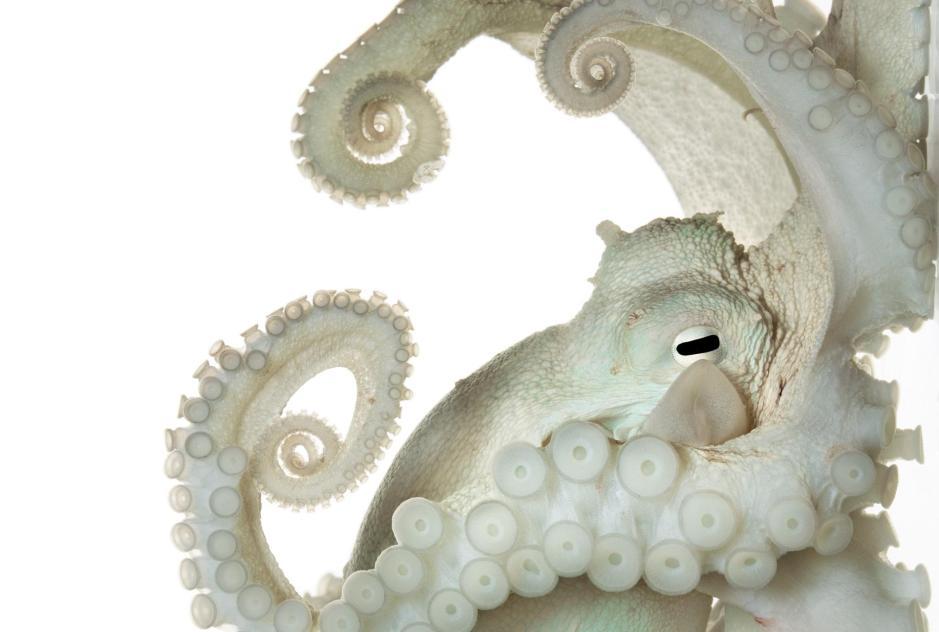 octopus-adapt-1900-1