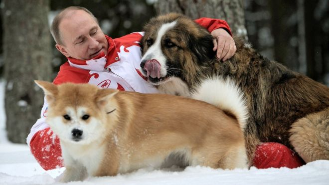 putin-dog